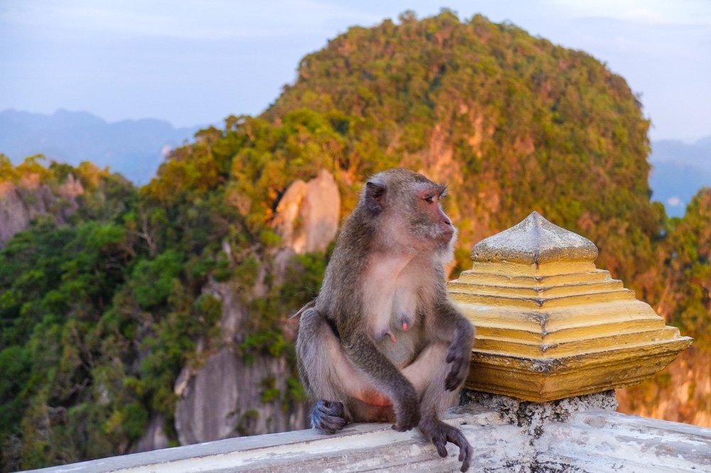 Pērtiķis Tiger Cave templī, Krabi - Labākās budžeta viesnīcas Krabī un Ao Nang