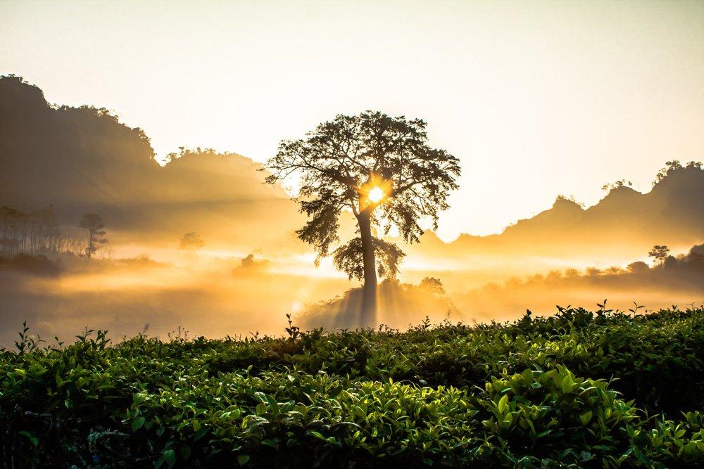 Saullēkts - Labākās budžeta viesnīcas Da Nang