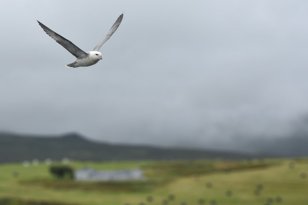 Putns lidojumā - Labākās budžeta viesnīcas Islandē