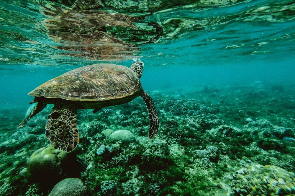 Bruņurupucis - Labākās budžeta viesnīcas Puerto Princesa salā
