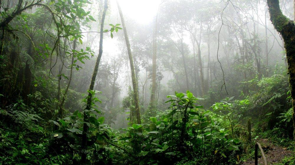 Džungļi - Labākās budžeta viesnīcas Ellā, Šrilankā