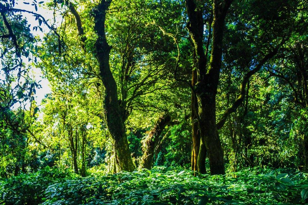 Zaļi džungļi - lietusmežs - Labākās budžeta viesnīcas Kandy, Šrilankā