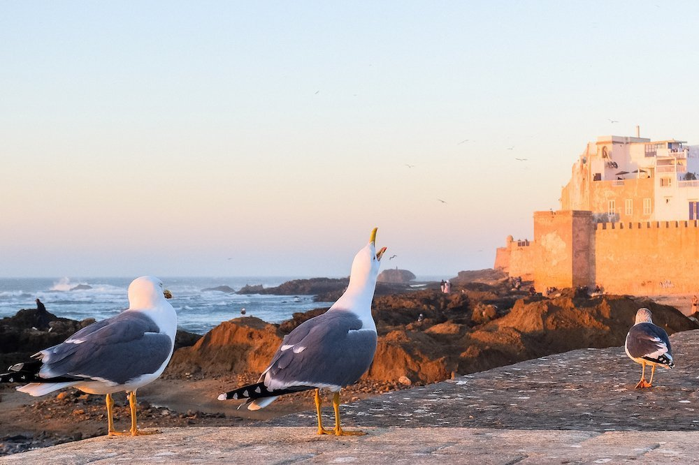 Esuveira (Essaouira), Maroka