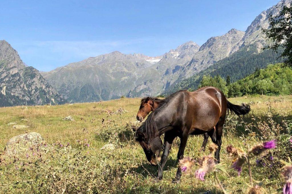 Kalnu skats - Gruzija