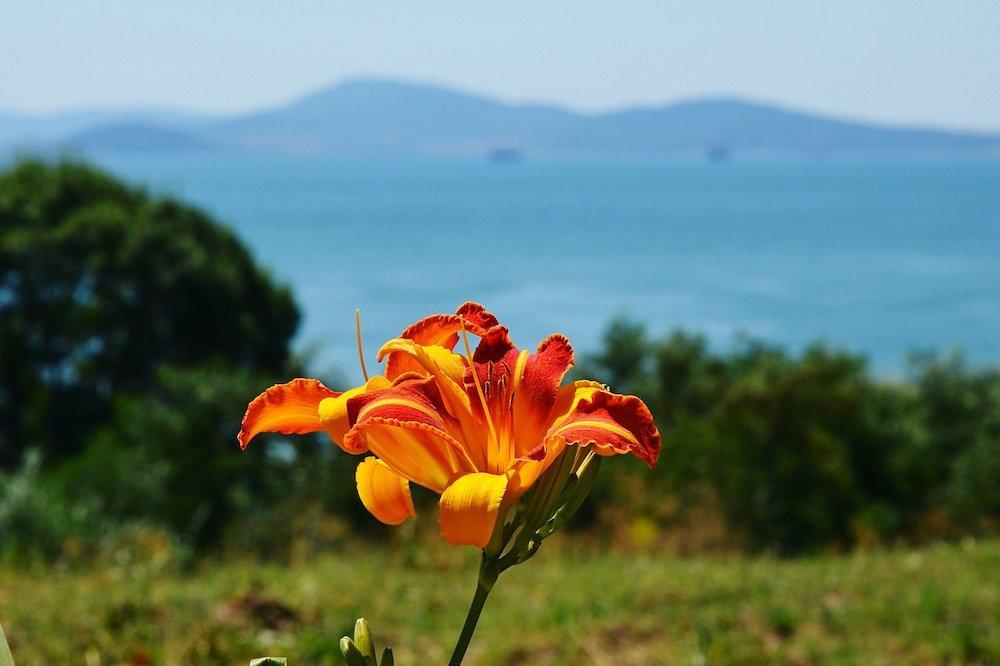 Zieds - Burgasa, Bulgārija